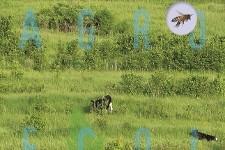 herstellende_landbouw_cover_crop_225x150